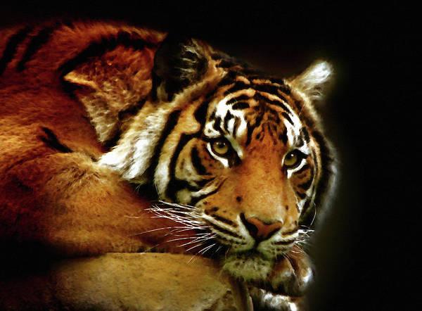 Mixed Media - Beautiful Tiger Eyes Watching You by Isabella Howard