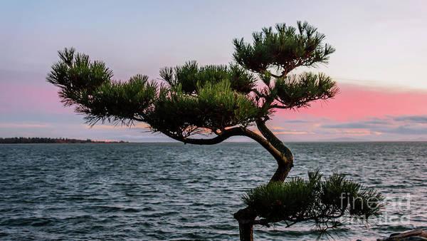 Evening Wall Art - Photograph - Beautiful Tree At Sunset. by Viktor Birkus