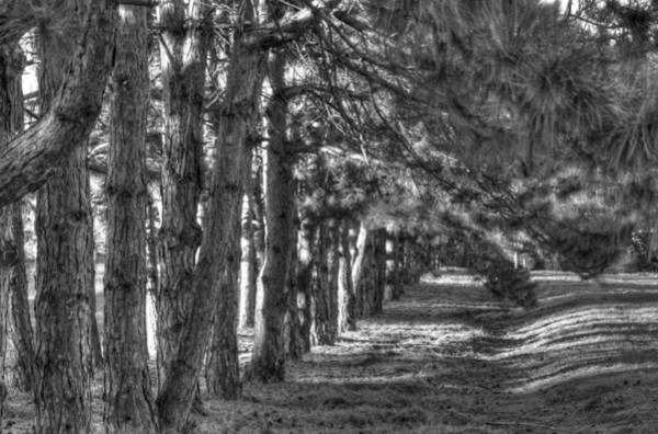 Photograph - Beautiful Trees 1 Bw by Dimitry Papkov