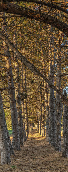 Photograph - Beautiful Trees 2 Pano by Dimitry Papkov