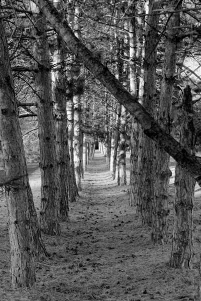 Photograph - Beautiful Trees 3 Bw by Dimitry Papkov