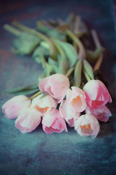 Photograph - Beautiful Tulips by Maria Heyens