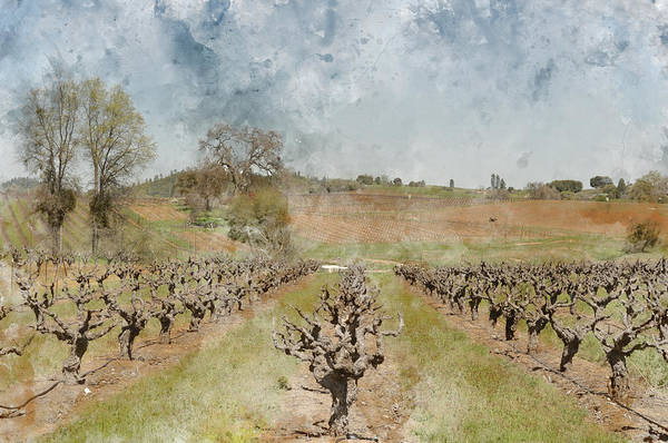 Photograph - Beautiful Vineyard In Spring by Brandon Bourdages