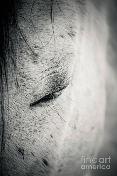 Photograph - Beautiful White Horse With Closed Eyes by Dimitar Hristov