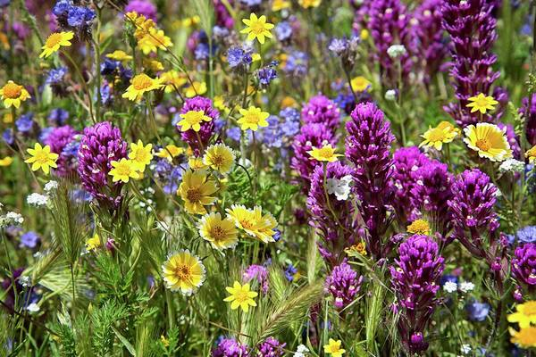 Photograph - Beautiful Wildflower Mix At Oak Gken Preserve by Lynn Bauer