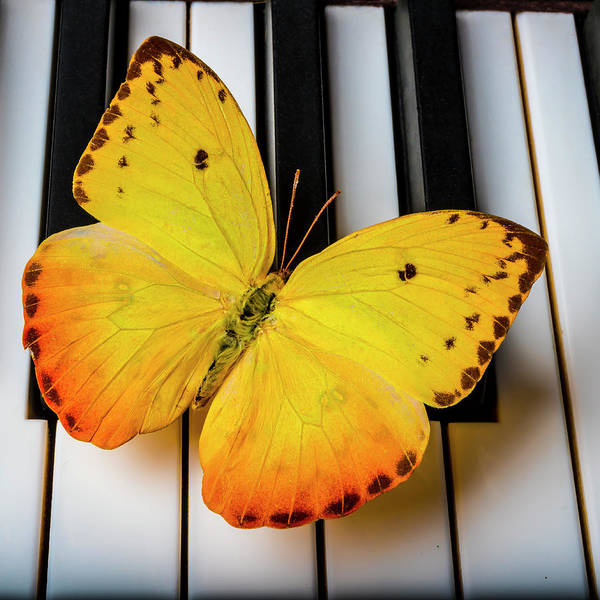 Wall Art - Photograph - Beautiful Yellow Butterfly On Keys by Garry Gay