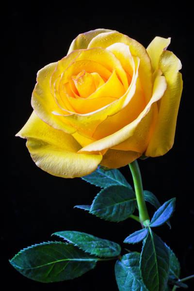 Wet Rose Wall Art - Photograph - Beautiful Yellow Rose by Garry Gay