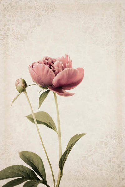 Photograph - Beauty And A Bud by Robin-Lee Vieira