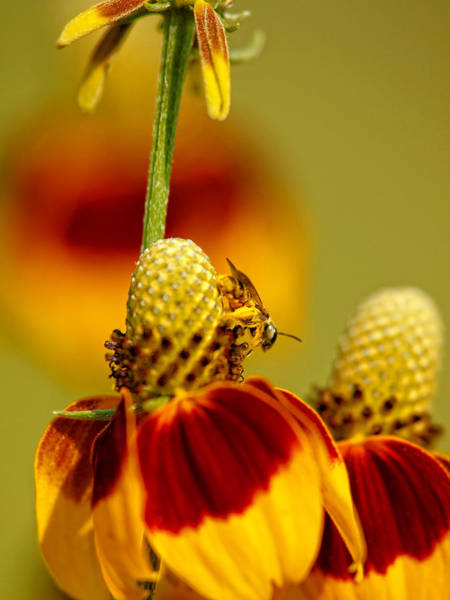 Photograph - Beauty And Bee by Charles McKelroy
