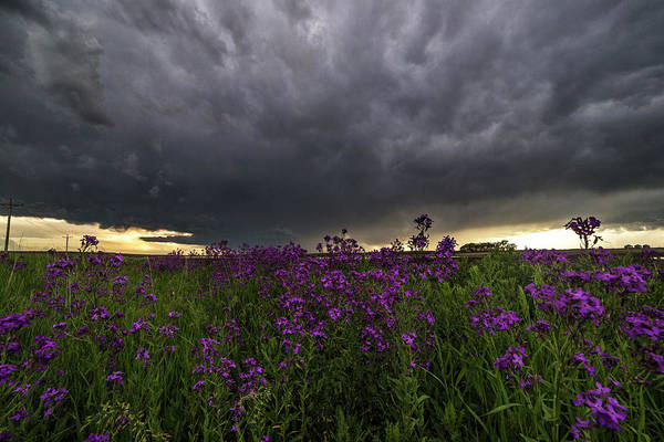 Severe Wall Art - Photograph - Beauty And The Beast by Aaron J Groen