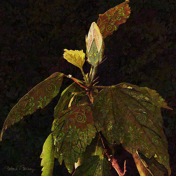 Digital Art - Beauty And The Bud by Barbara Berney
