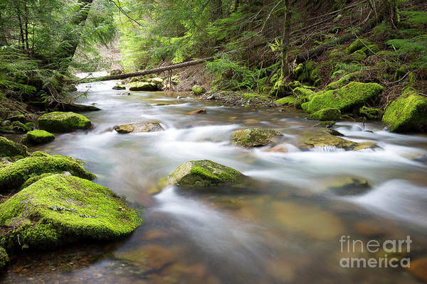 Wall Art - Photograph - Beauty Creek Spring by Idaho Scenic Images Linda Lantzy