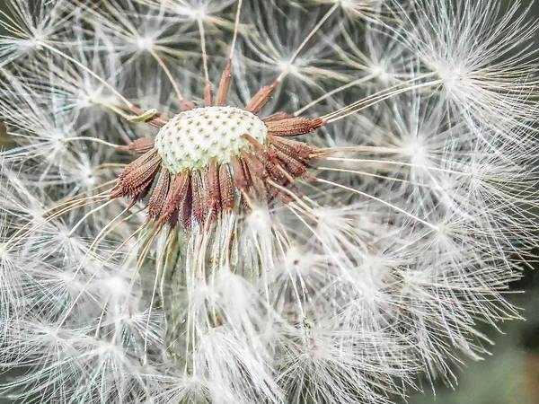 Photograph - Beauty Even If Only A Weed by Jennifer Grossnickle