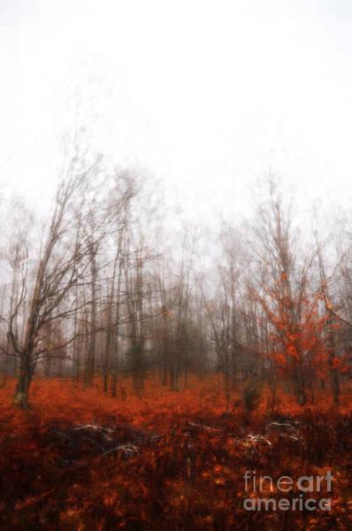 Digital Art - Beauty From The Fog by Christina VanGinkel