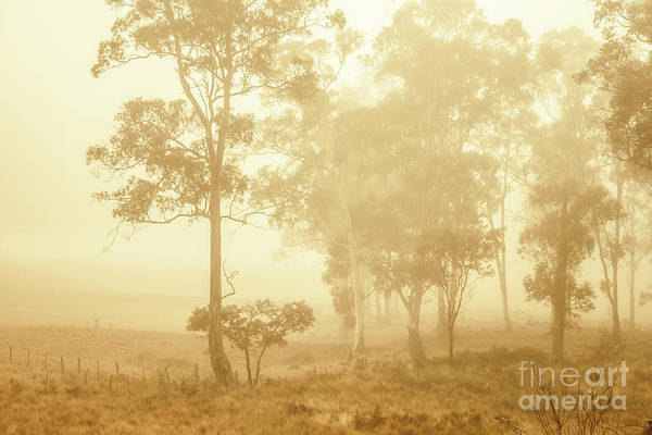 Wall Art - Photograph - Beauty In A Forest Fog by Jorgo Photography - Wall Art Gallery