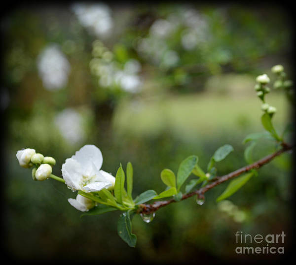Wall Art - Photograph - Beauty In Simple Things by Eva Thomas