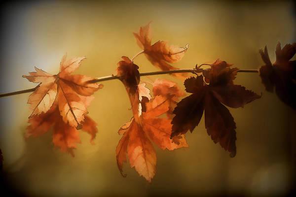Wall Art - Digital Art - Beauty In The Autumn  by Terry Davis