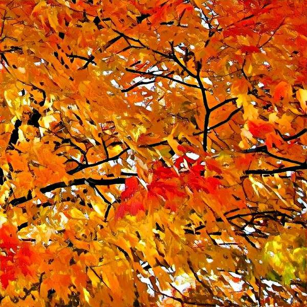 Photograph - Beauty In The Fall by Robert Knight
