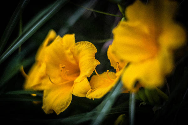 Photograph - Beauty In The Little Things by Parker Cunningham