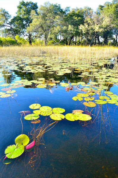 Photograph - Beauty In The Okavango by Don Mercer