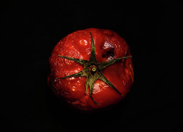 Rotten Wall Art - Photograph - Beauty Of Aged Tomato by Hyuntae Kim