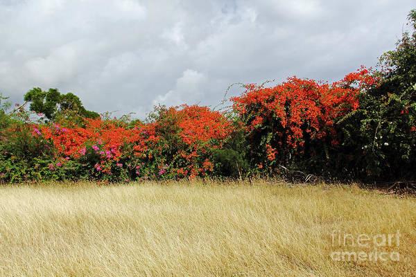 Photograph - Beauty Of Bougainvillea by Jennifer Robin