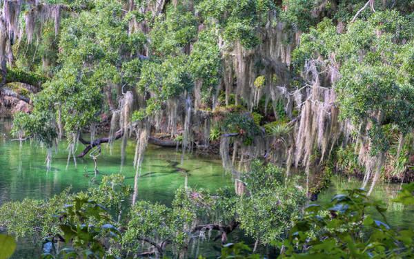 Photograph - Beauty Of Florida by John M Bailey