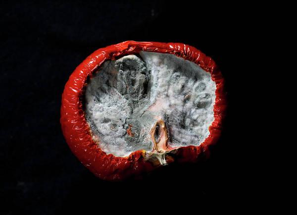 Fungi Photograph - beauty of fungus IV by Hyuntae Kim