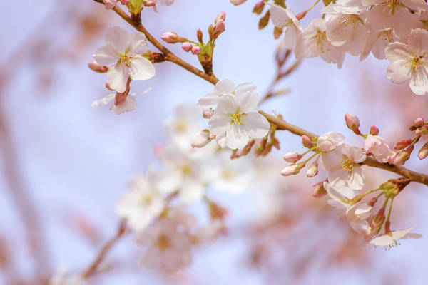 Photograph - Beauty Of Spring by Rima Biswas