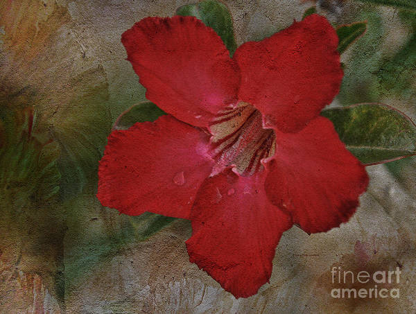 Painting - Beauty Of The Desert Rose by Deborah Benoit