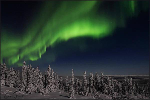 Photograph - Beauty Of The Night by Erika Fawcett