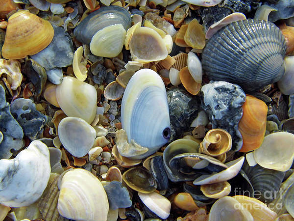 Photograph - Beauty Of The Shells by D Hackett