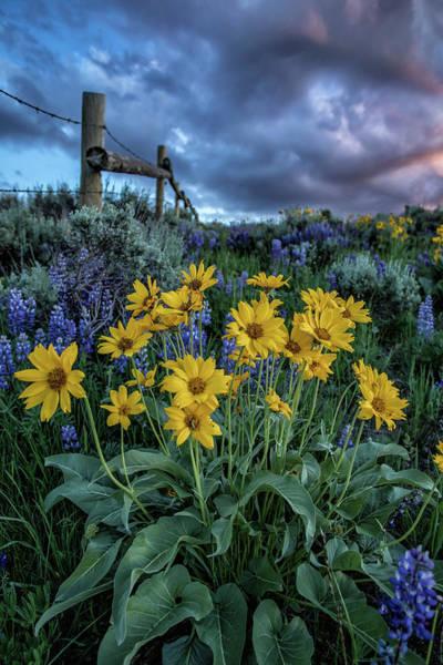 Laramie Photograph - Beauty Untamed by Mark Cooper