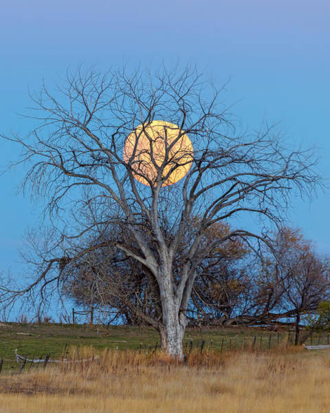 Photograph - Beaver Moon Portrait by James BO Insogna