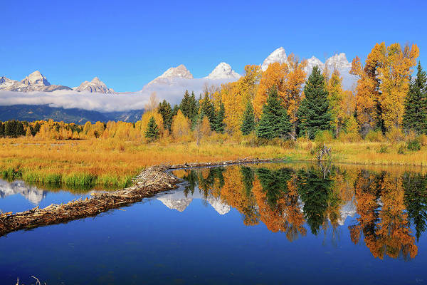 Photograph - Beaver Pond Autumn Reflections by Greg Norrell