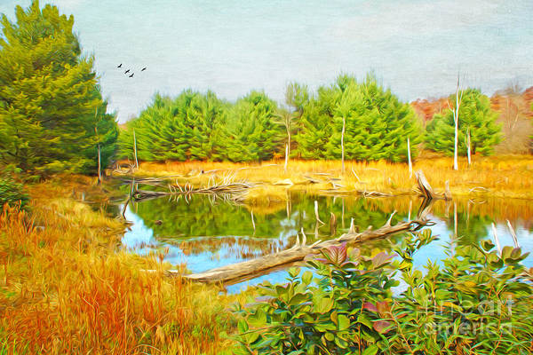Beaver Pond Wall Art - Photograph - Beaver Pond by Laura D Young