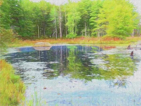 Beaver Pond Reflections Art Print