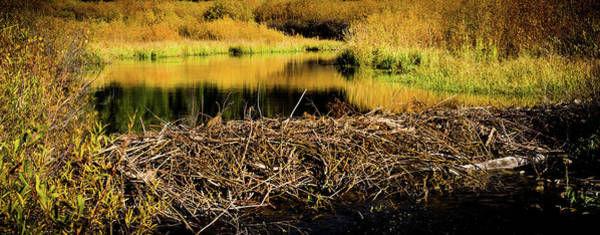 Photograph - Beaver Pond Reflections by TL Mair