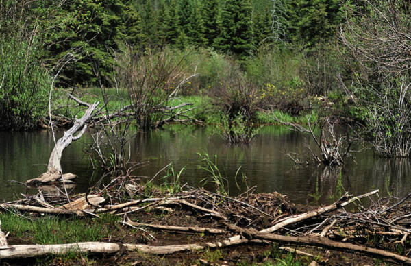 Photograph - Beaver Pond by Ron Cline