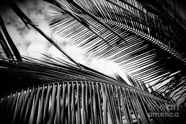Wall Art - Photograph - Maui Paradise Palms Monochrome by Sharon Mau
