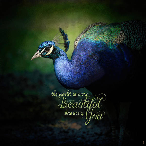 Photograph - Because Of You - Peacock Art by Jai Johnson