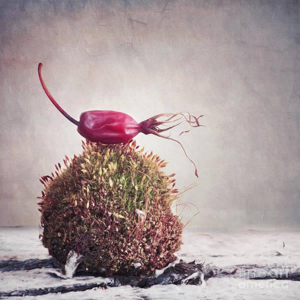 Wall Art - Photograph - Bed Of Moss by Priska Wettstein