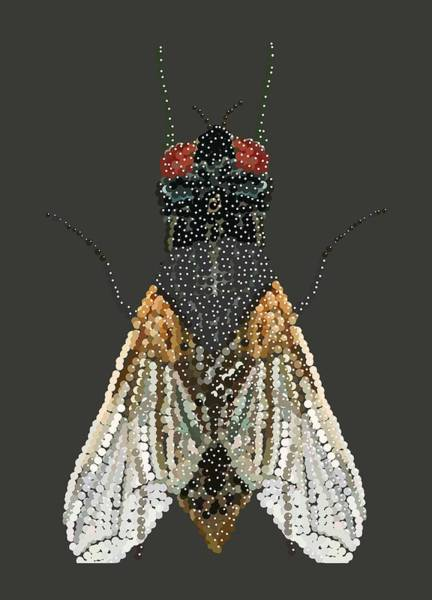 Bedazzled Housefly Transparent Background Art Print