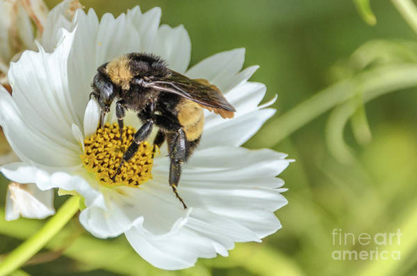 Photograph - Bee 3 by Andrea Anderegg