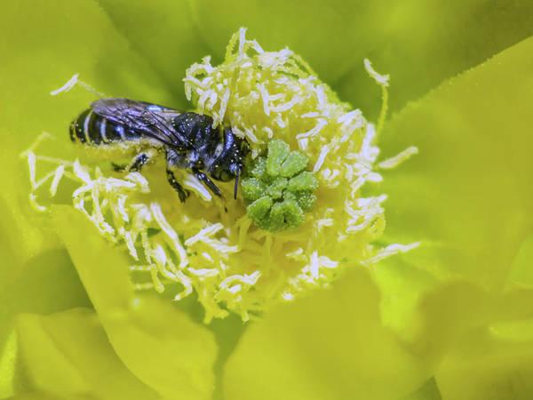 Photograph - Bee 6908-042318-1cr by Tam Ryan