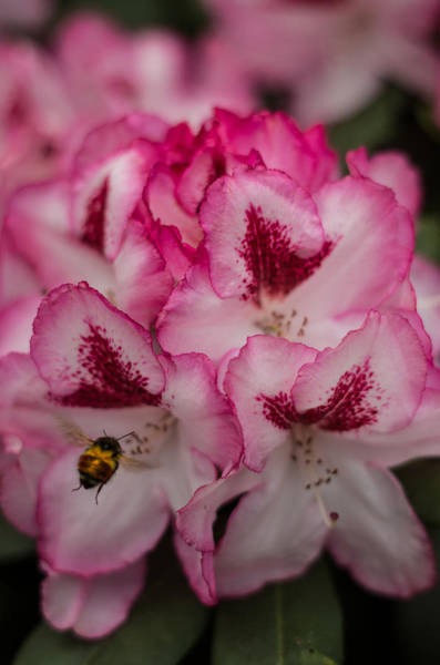 Photograph - Bee Mine by Marilyn Wilson