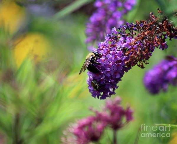 Photograph - Bee And Beetle Brunch by Karen Adams