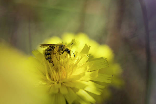 Photograph - Bee At Work by Robert Potts