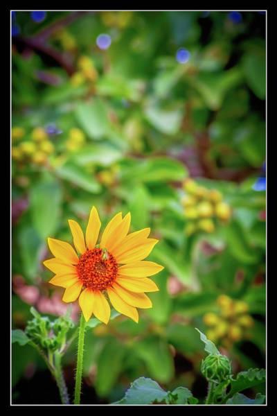 Otp Photograph - Bee Break by Marshall Barth