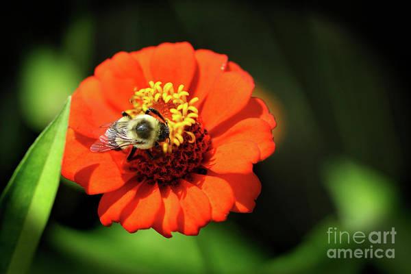 Photograph - Bee Brunch by Karen Adams